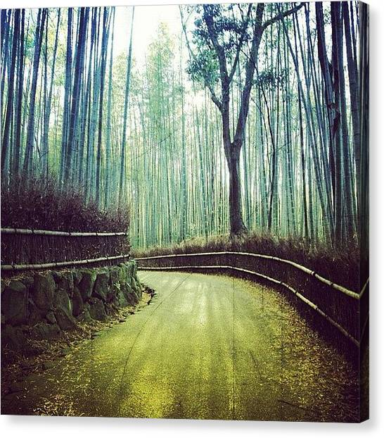 Grove Canvas Print - Bamboo Grove Kyoto by Marc Gascoigne