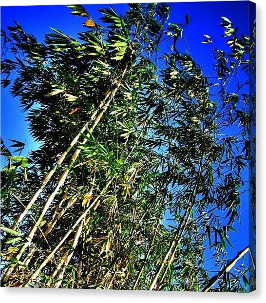 Bamboo Canvas Print - Bamboo In The Blue... #bamboo #tree by Ikhwan Akbar