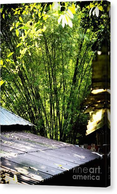 Bamboo Shade Canvas Print