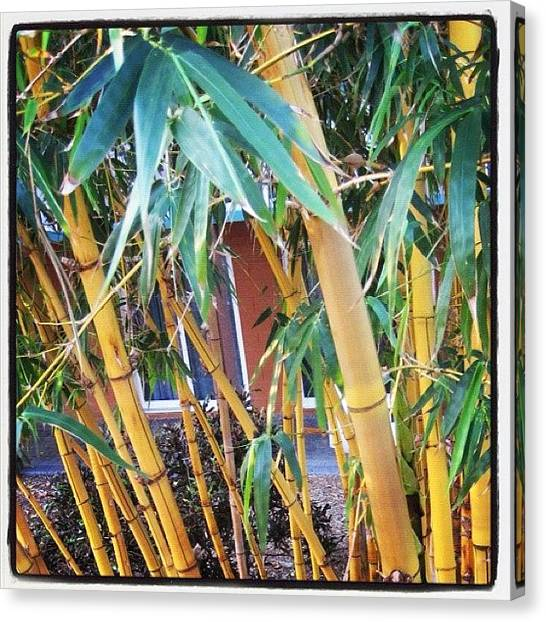 Bamboo Canvas Print - #bamboo #trees #cocoa #beach #florida by Michael Hughes