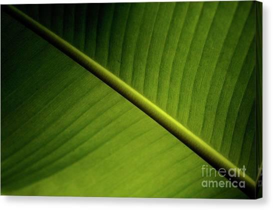 Surfboard Fence Canvas Print - Banana Leaf 2 by Bob Christopher