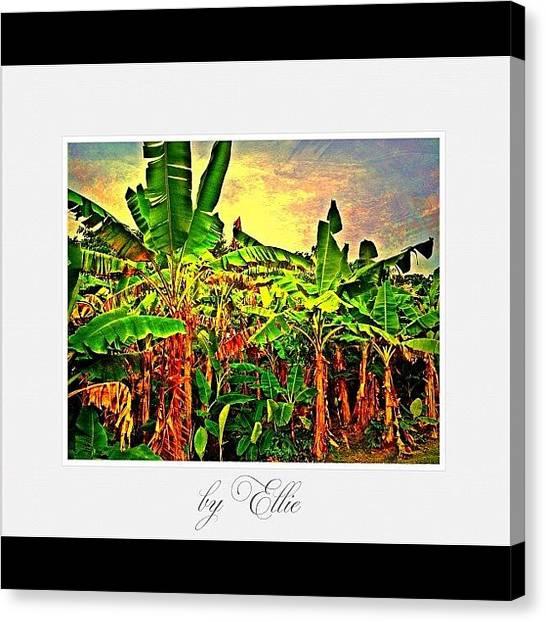 Bananas Canvas Print - Banana Plantation by Ellie Doong