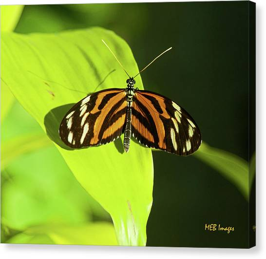 Banded Orange Butterfly Canvas Print