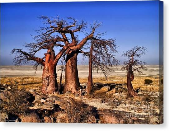 Baobabs At Kubu Canvas Print