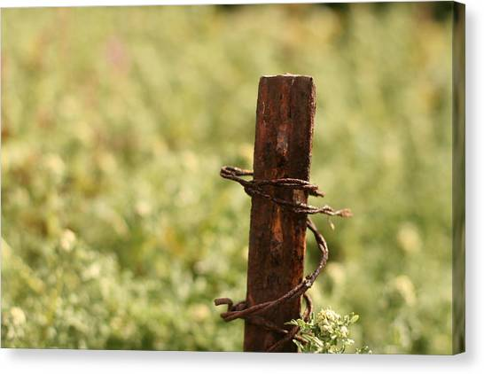 Barbed Wire Green Canvas Print