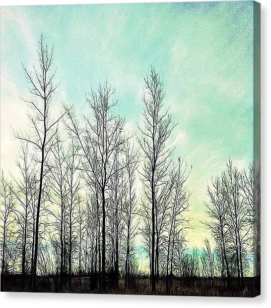 Manitoba Canvas Print - Bare Trees In Blue by Jessica Mutimer
