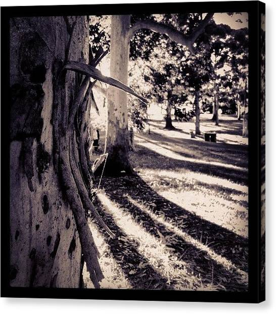 Saints Canvas Print - Barking Up The Wrong Tree #iphoneography by Kendall Saint