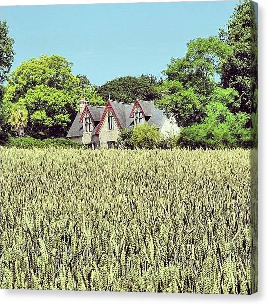 Farmhouse Canvas Print - Barley Field, France #barley #field by Suzie Attaway
