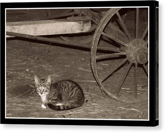 Barn Cat II Canvas Print