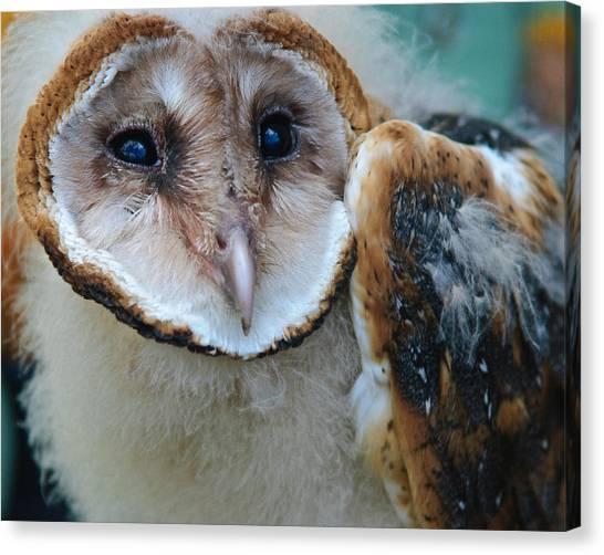 Barn Owlet Canvas Print
