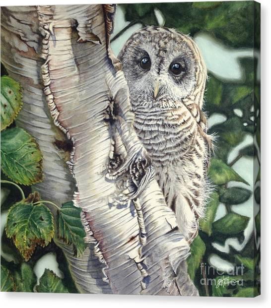Barred Owl II Canvas Print
