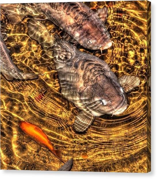 Goldfish Canvas Print - #basilica #yerebatan #goldfish by Denis Dynin