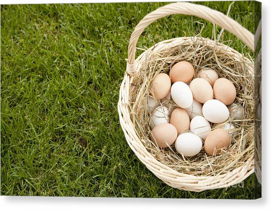 Easter Baskets Canvas Print - Basket Of Eggs In The Grass by Shannon Fagan