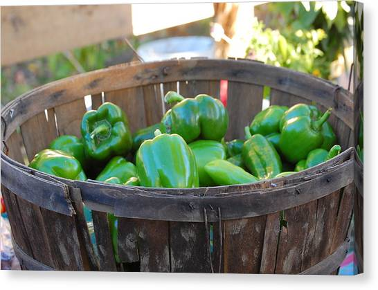 Basket Of Green Peppers Canvas Print