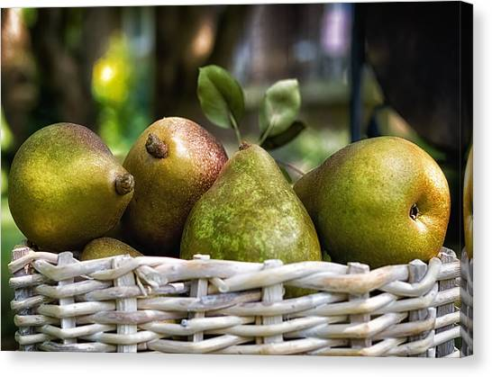 Basket Of Pears Canvas Print