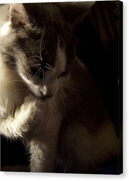 Manx Cats Canvas Print - Bath Before Breakfast by Pamela Roberts-Aue