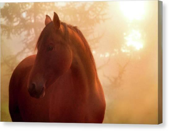 Bay Horse In Fog At Sunrise Canvas Print by Anne Louise MacDonald of Hug a Horse Farm