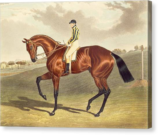 Bay Thoroughbred Canvas Print - Bay Middleton Winner Of The Derby In 1836 by John Frederick Herring Snr