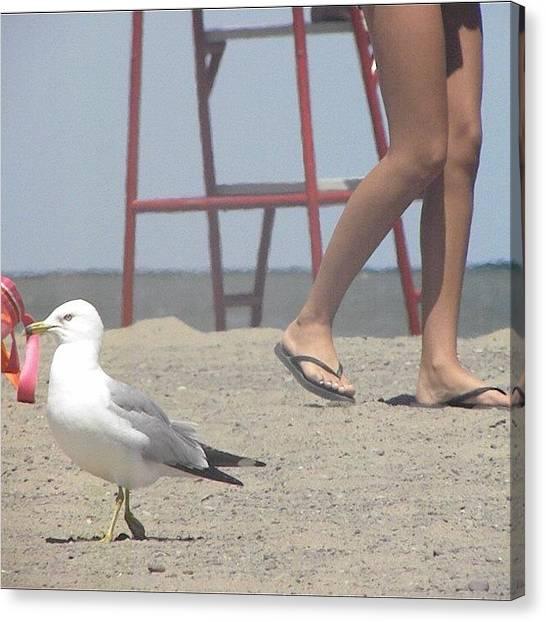 Ocean Animals Canvas Print - Beach Day #seagull #bird #person #birds by Jessie Schafer