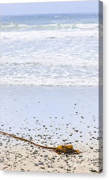 Vancouver Island Canvas Print - Beach Detail On Pacific Ocean Coast by Elena Elisseeva