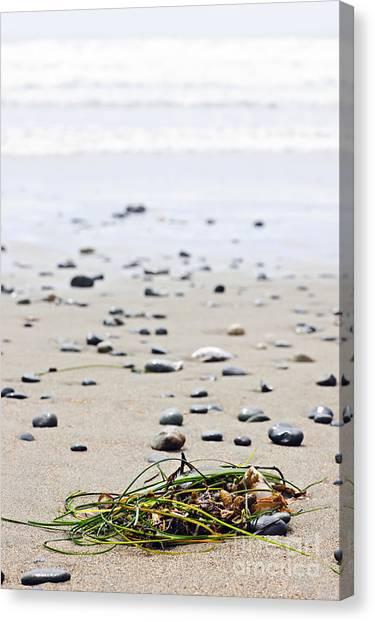 Vancouver Island Canvas Print - Beach Detail On Pacific Ocean Coast Of Canada by Elena Elisseeva