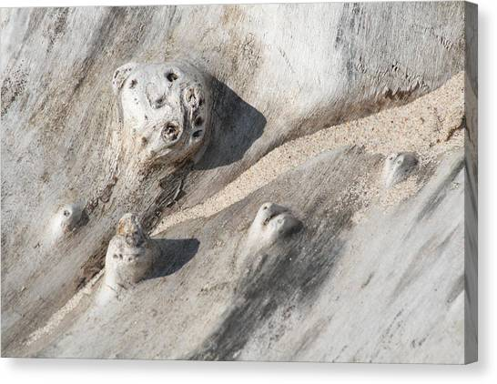Beach Driftwood I Canvas Print