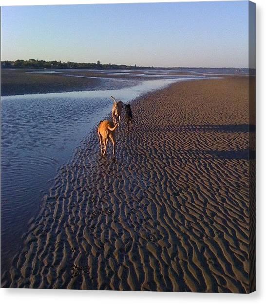 Rottweilers Canvas Print - #beach #sunset #sand #dogs #bestfriends by Regan Webb
