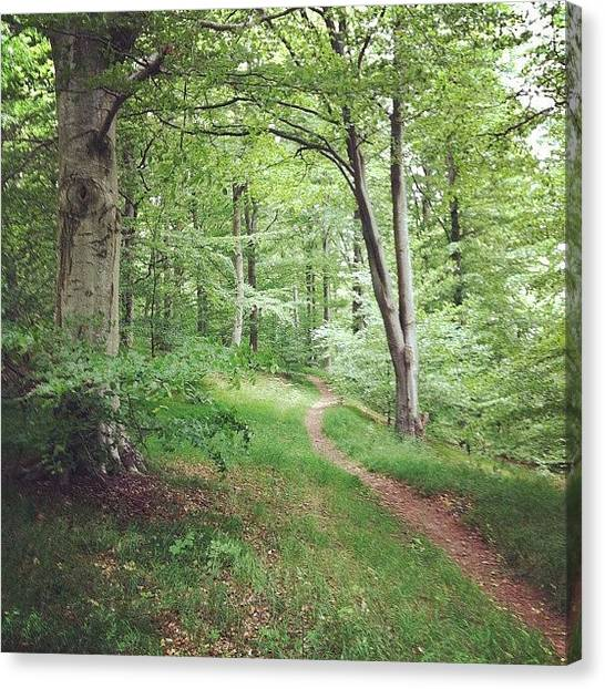 Forest Paths Canvas Print - Beach Wood Trail by Mikael Andersson