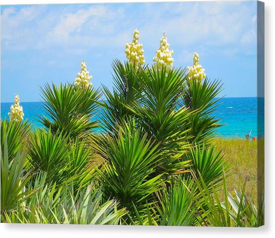 Beach Yucca In Blossom Canvas Print