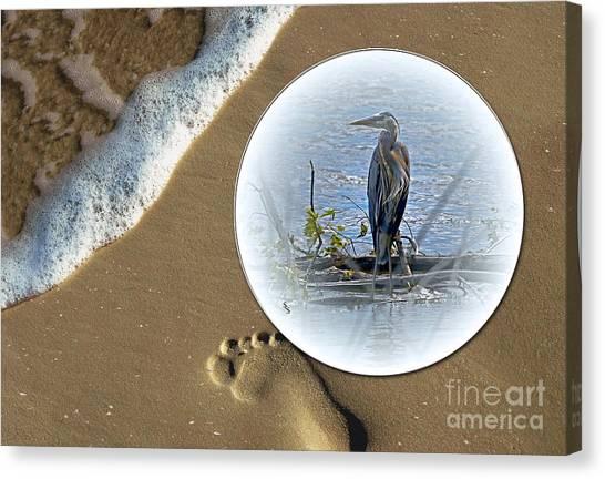 Beached Heron Canvas Print