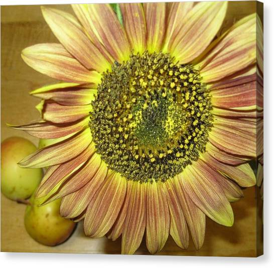 Beaming Sunflower Canvas Print by Tracy Fallstrom