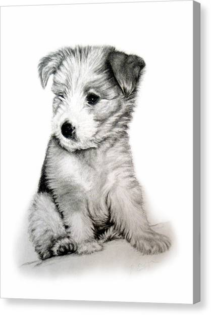 Bearded Collie Pup Canvas Print by Michelle Harrington