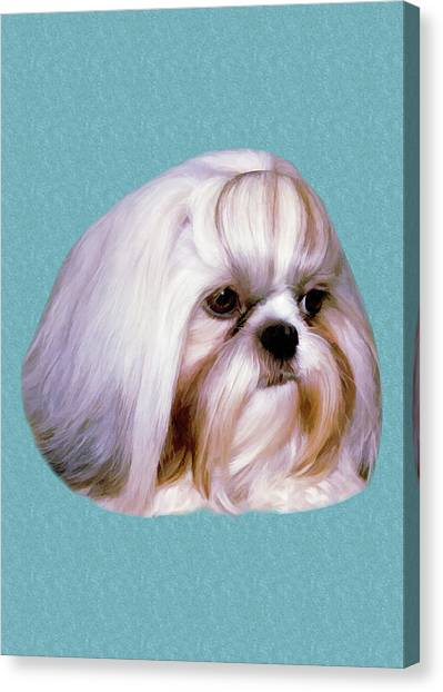 Shih Tzus Canvas Print - Brindle And White Shih Tzu Dog by Delores Knowles