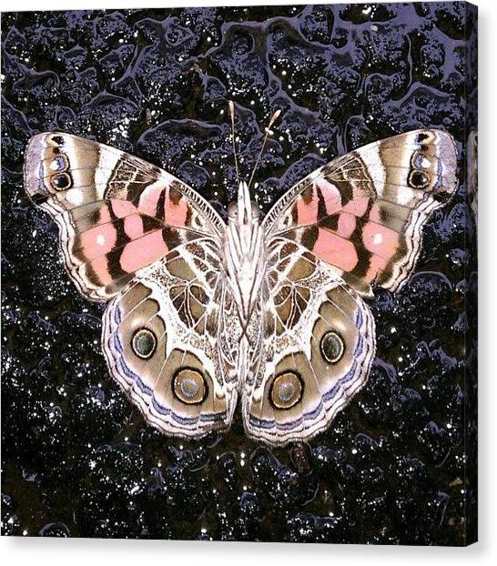 Wet Canvas Print - Beautiful Butterfly by Teresa Sabino