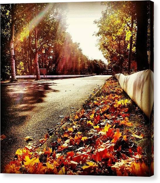 Back Canvas Print - Beautiful Fall I by Ole Back