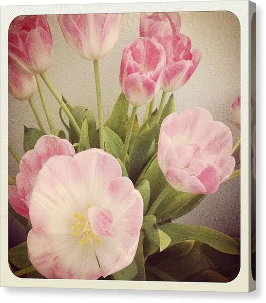 Tulips Canvas Print - #beautiful #flowers #flower #pink by Tarek Aly