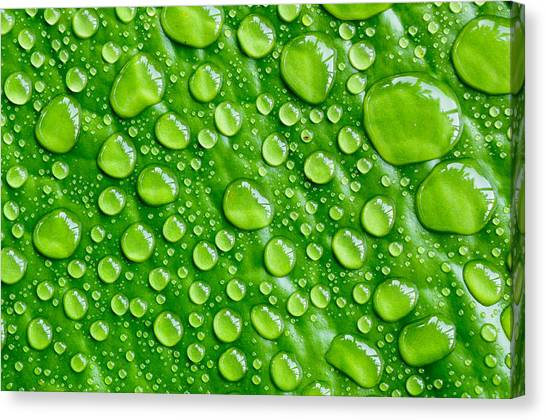Beautiful Green Leaf With  Water Drops Canvas Print by Chatuporn Sornlampoo