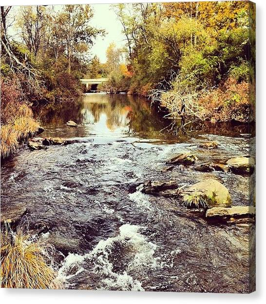 Trout Canvas Print - Beautiful Morning On Dyberry Creek But by Dave M