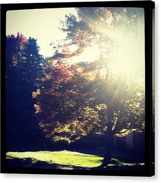 Songbirds Canvas Print - Beautiful Morning Walk To School by Cody Cardinal