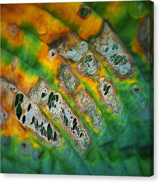Beauty In Decay Canvas Print by Paul Causie