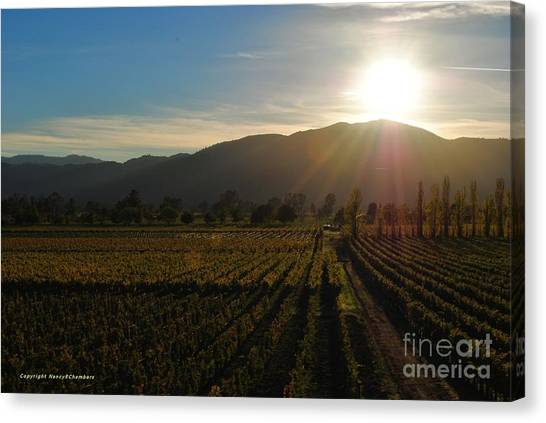 Beauty In The Vineyards Canvas Print