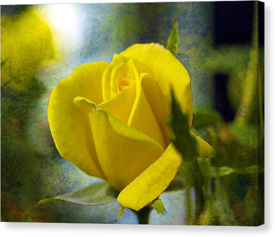 Beauty Of A Yellow Rose Canvas Print by J Larry Walker