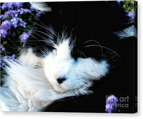 Beauty Sleep Canvas Print