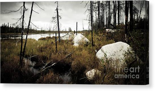 Beaver Pond Canvas Print