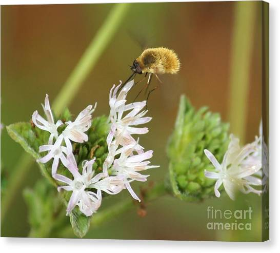 Bee Fly Don't Bother Me Canvas Print