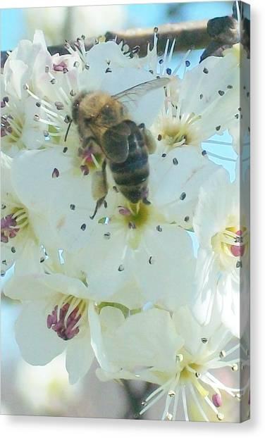 Bee Nice Canvas Print by Wide Awake Arts