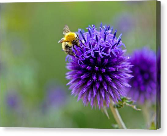 Bee On Garden Flower Canvas Print