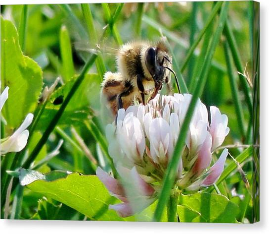 Beeautiful Canvas Print by Katie Bauer