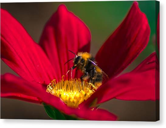 Canvas Print featuring the photograph Beebot by Stwayne Keubrick