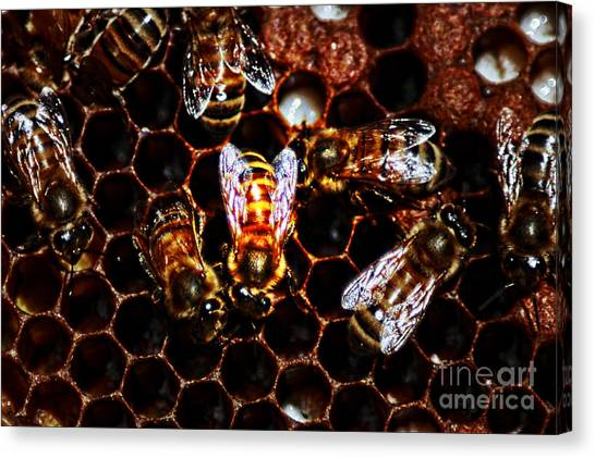 Bee's Work Canvas Print by David Taylor